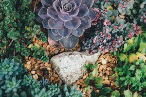 plantas desérticas